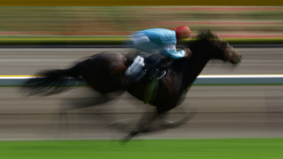 Racehorse at speed on the track