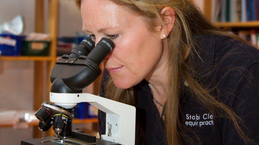 Lucy Stamp examining semen under a microscope