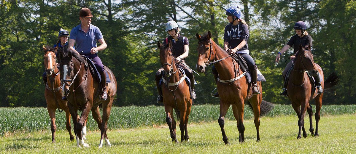A string of racehorses on the South Downs