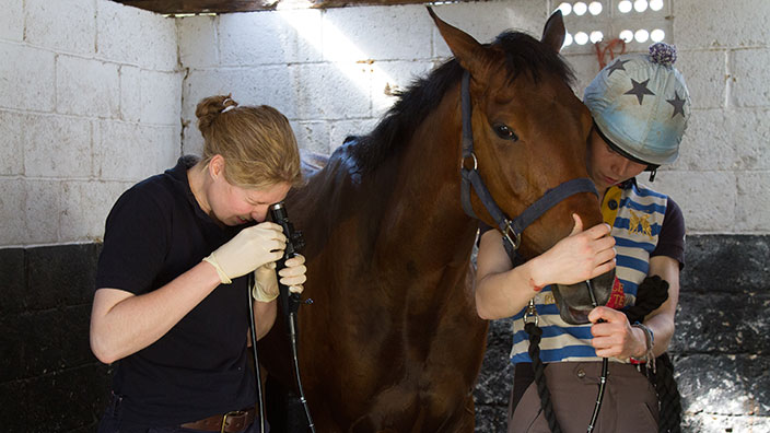 Endoscopy of a racehorse