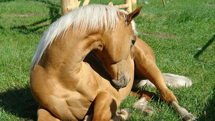 Colic | Stable Close Equine Practice | Winchester, Hampshire