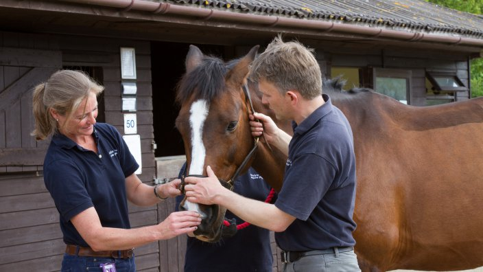 Two vets examining the head of a horse