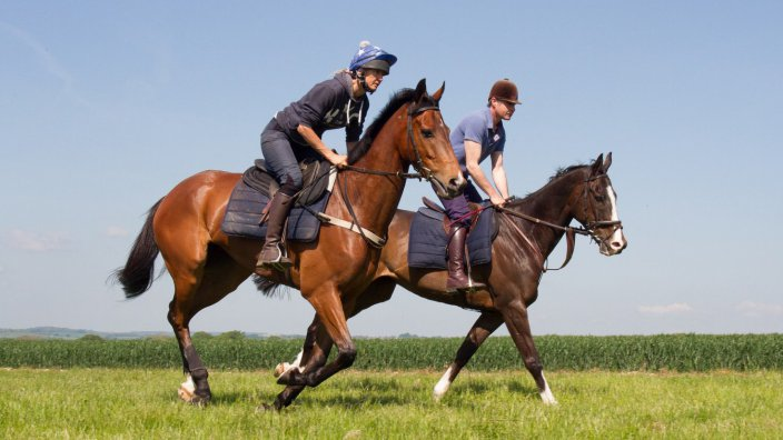 Two racehorses on the gallop